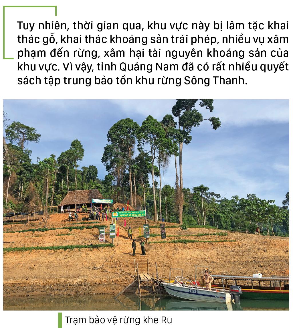 Nỗ lực giữ rừng Sông Thanh ảnh 6