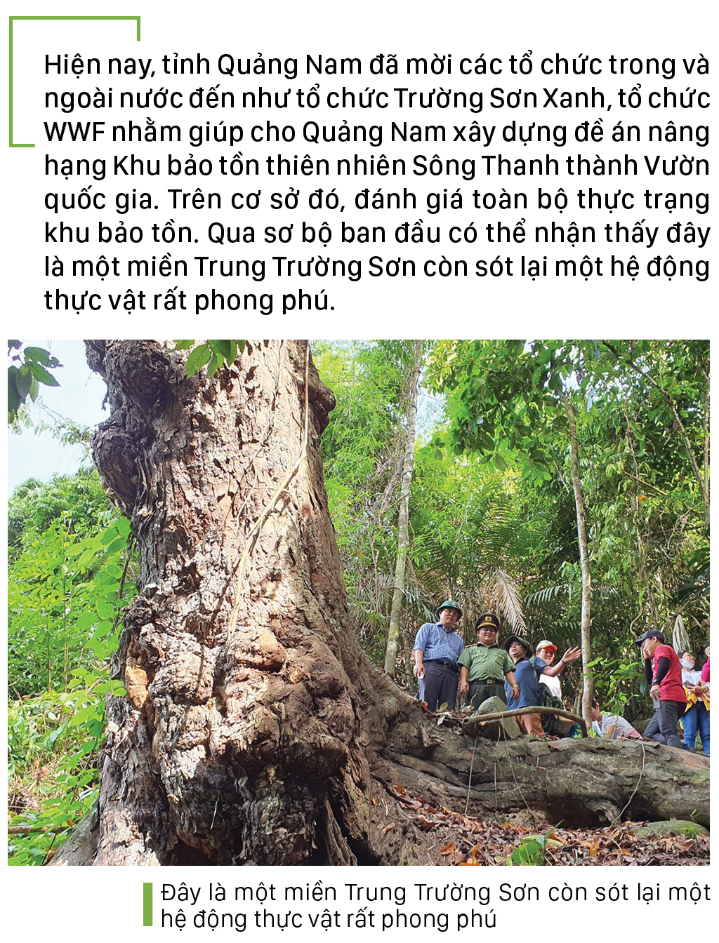 Nỗ lực giữ rừng Sông Thanh ảnh 12