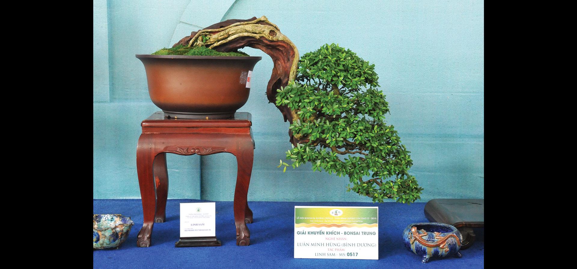 Nghệ thuật bonsai thú chơi tao nhã ảnh 8