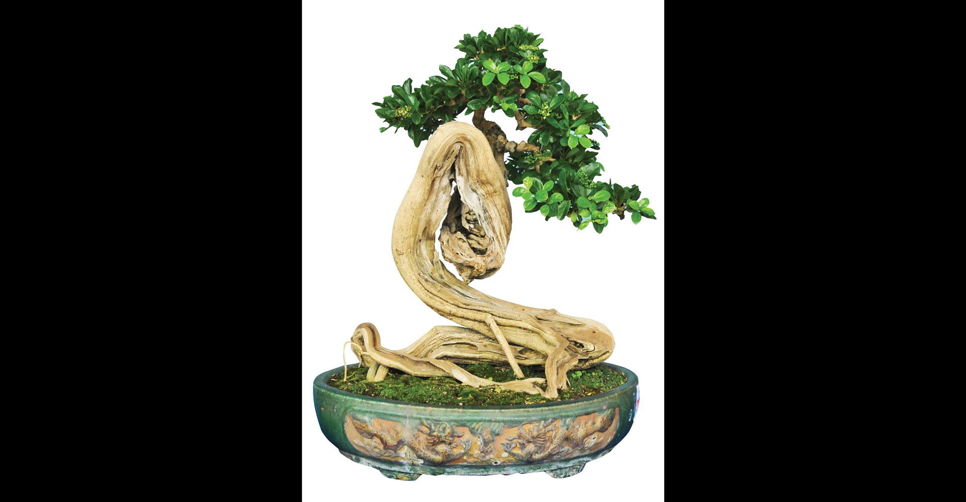 Nghệ thuật bonsai thú chơi tao nhã ảnh 1