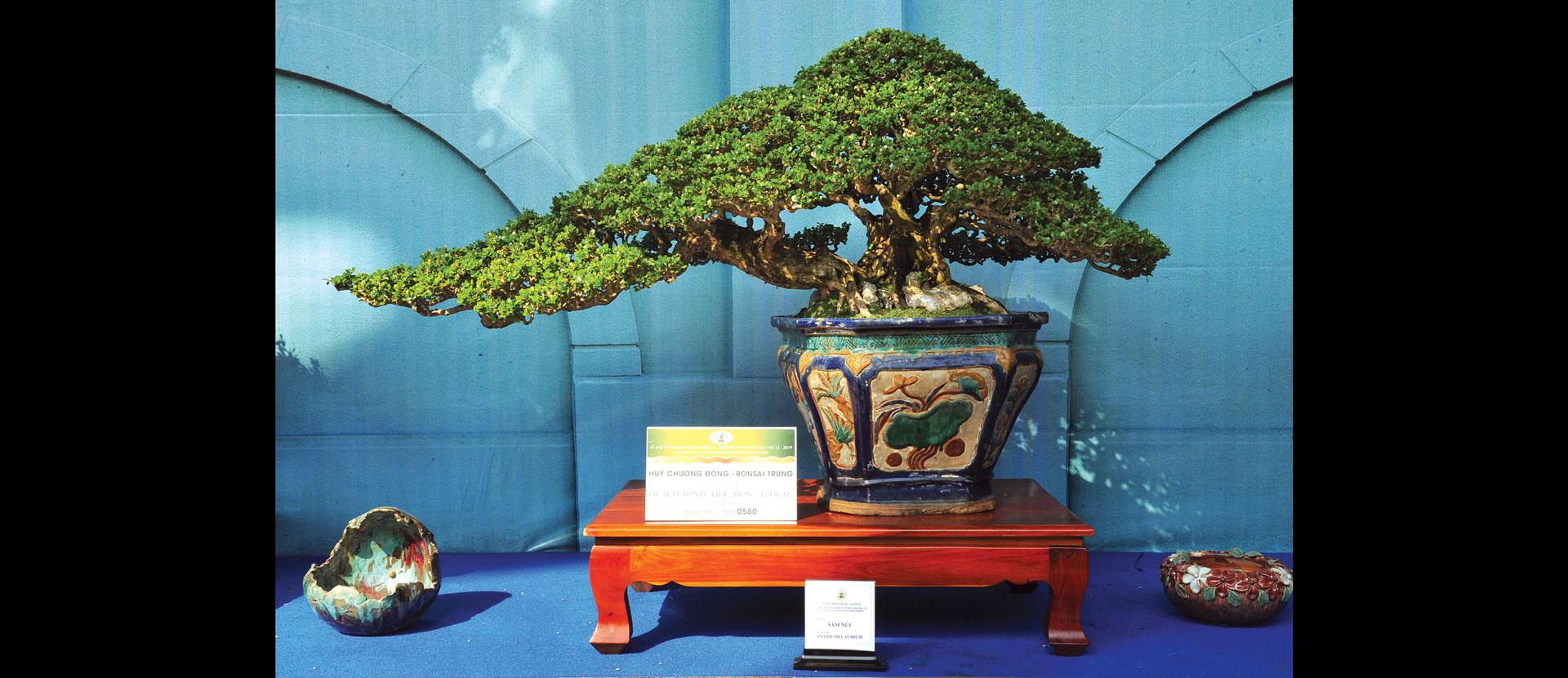 Nghệ thuật bonsai thú chơi tao nhã ảnh 2