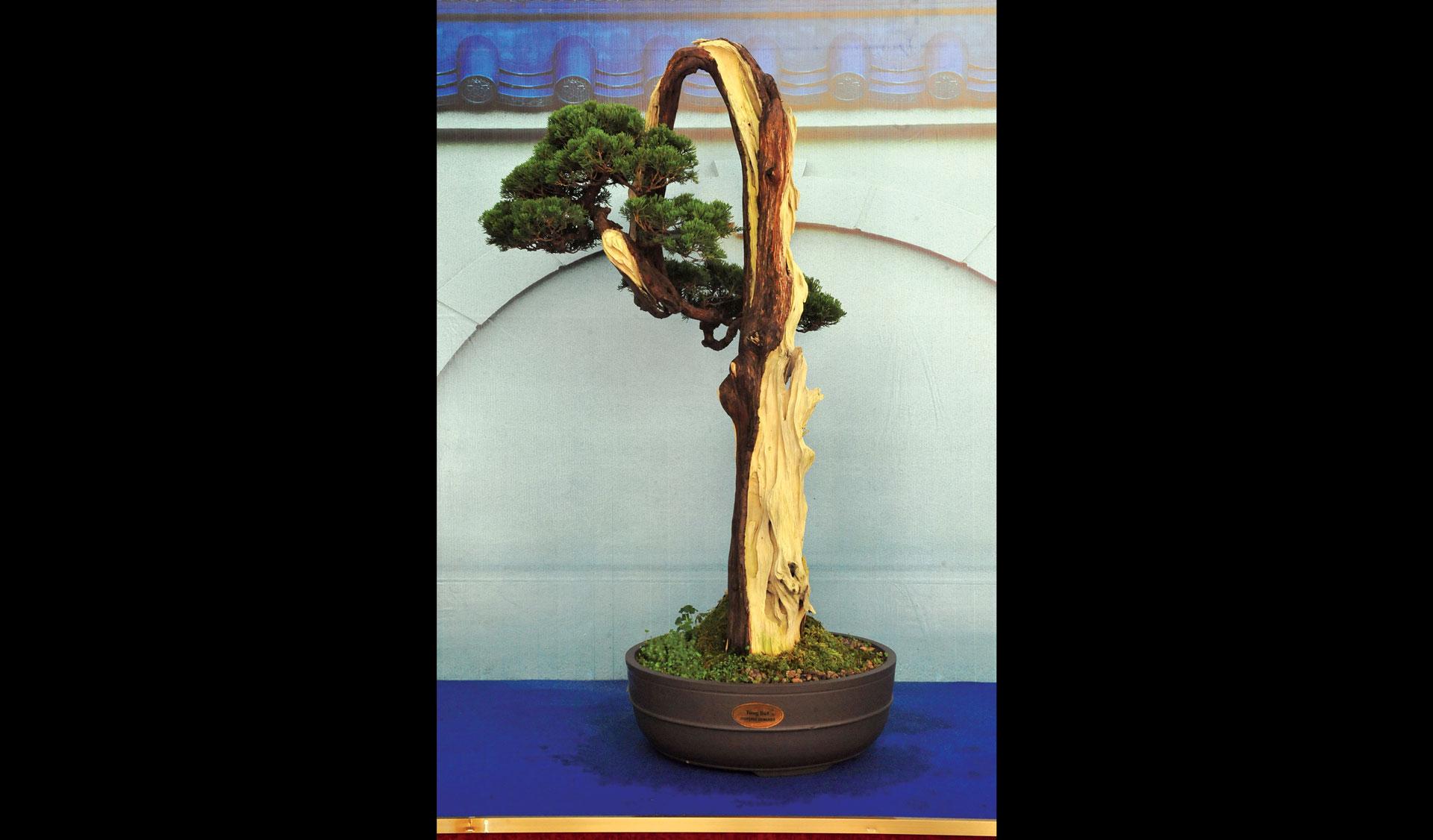 Nghệ thuật bonsai thú chơi tao nhã ảnh 4