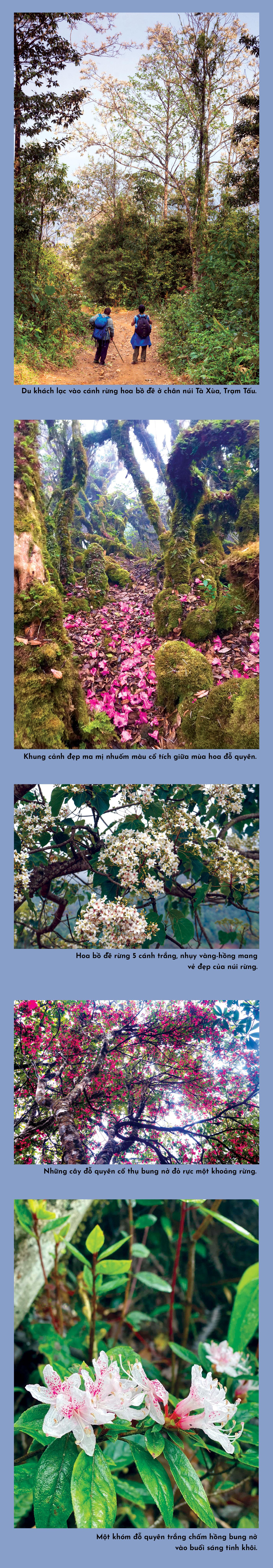 Đỉnh Tà Xùa quyến rũ muôn sắc hoa ảnh 1