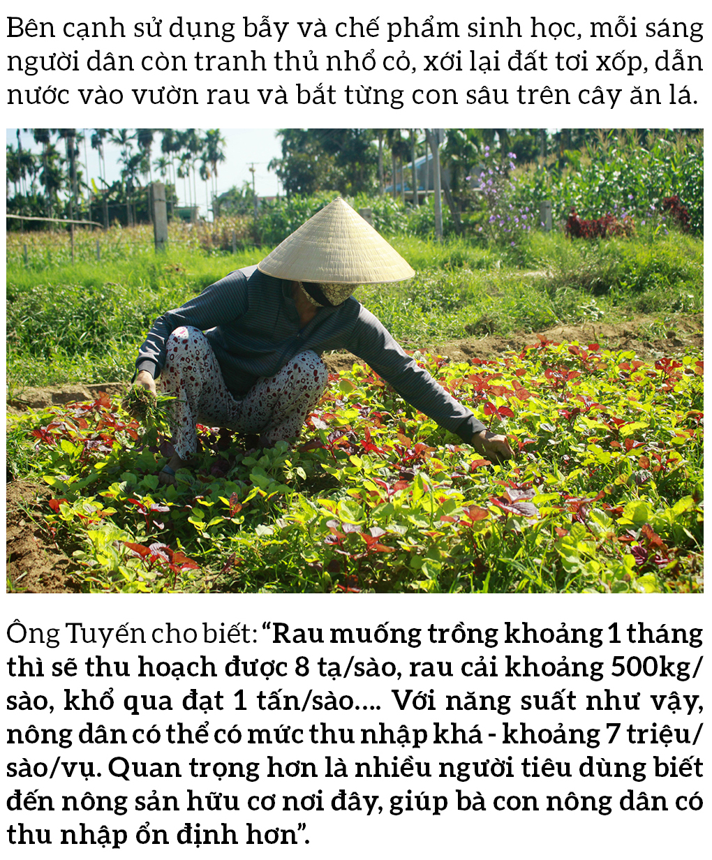 Nông dân tự làm bẫy sinh học, trừ sâu thảo mộc để trồng rau hữu cơ ảnh 13
