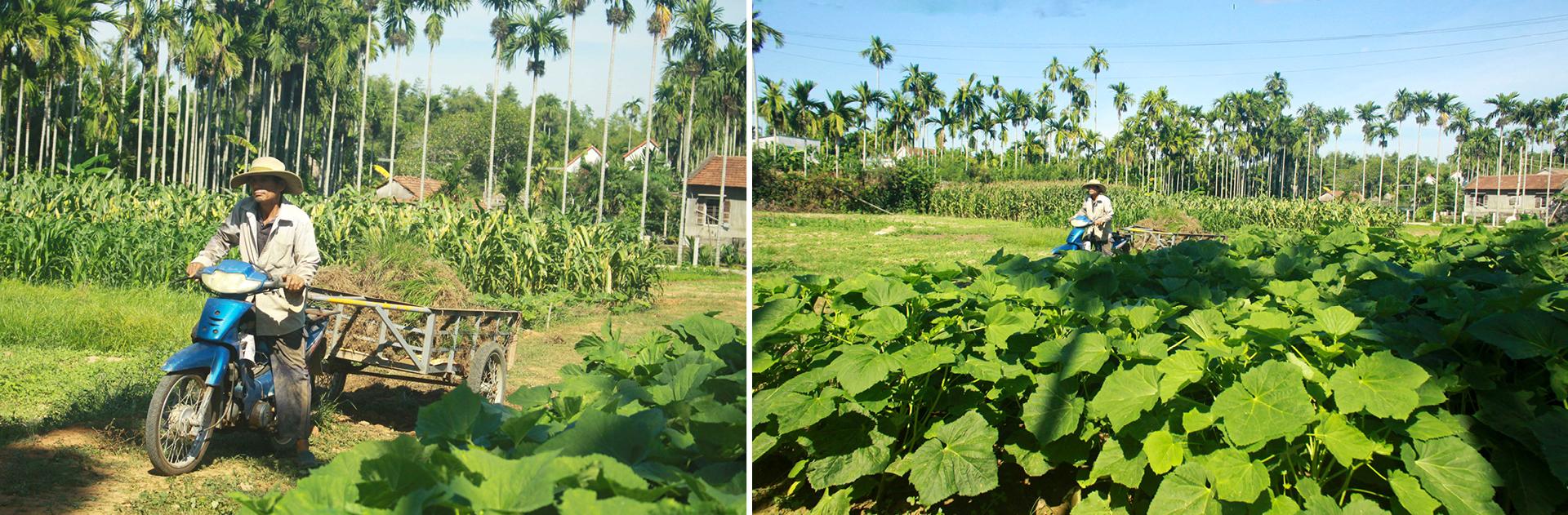Nông dân tự làm bẫy sinh học, trừ sâu thảo mộc để trồng rau hữu cơ ảnh 14