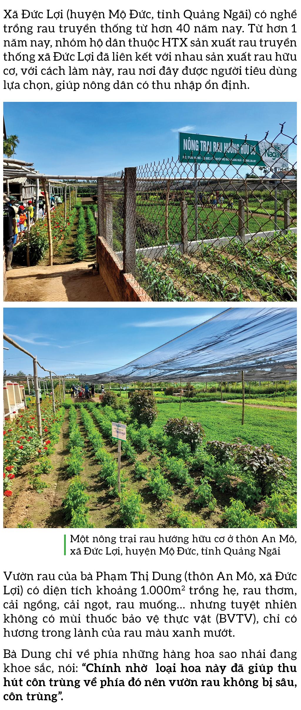 Nông dân tự làm bẫy sinh học, trừ sâu thảo mộc để trồng rau hữu cơ ảnh 2
