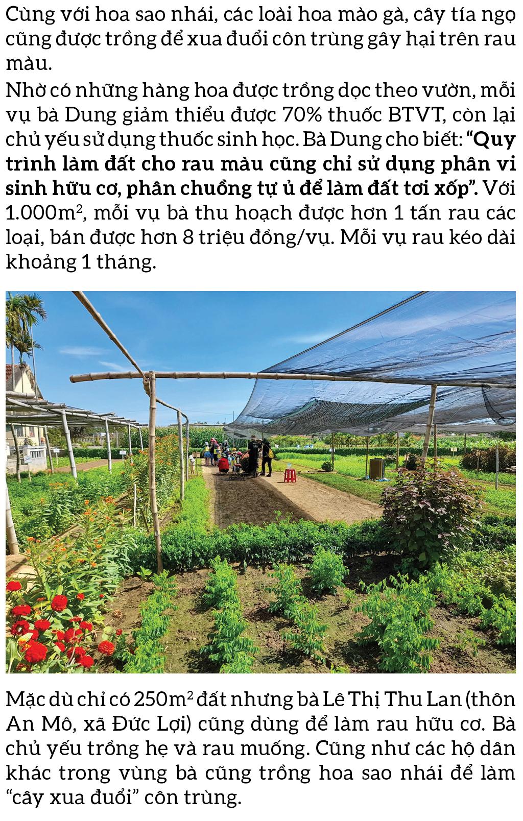 Nông dân tự làm bẫy sinh học, trừ sâu thảo mộc để trồng rau hữu cơ ảnh 4