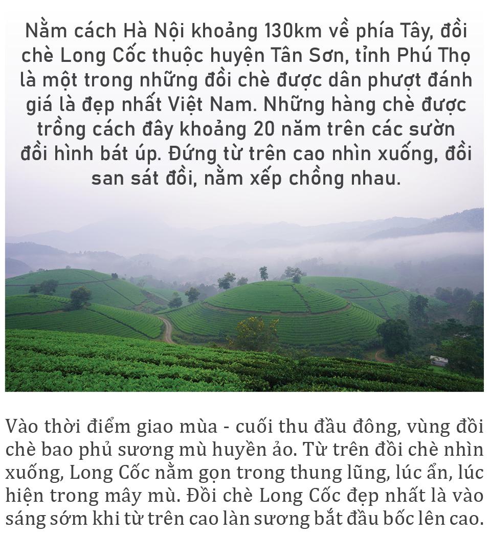 Đồi chè Long Cốc đẹp huyền ảo trong sương mờ ảnh 1