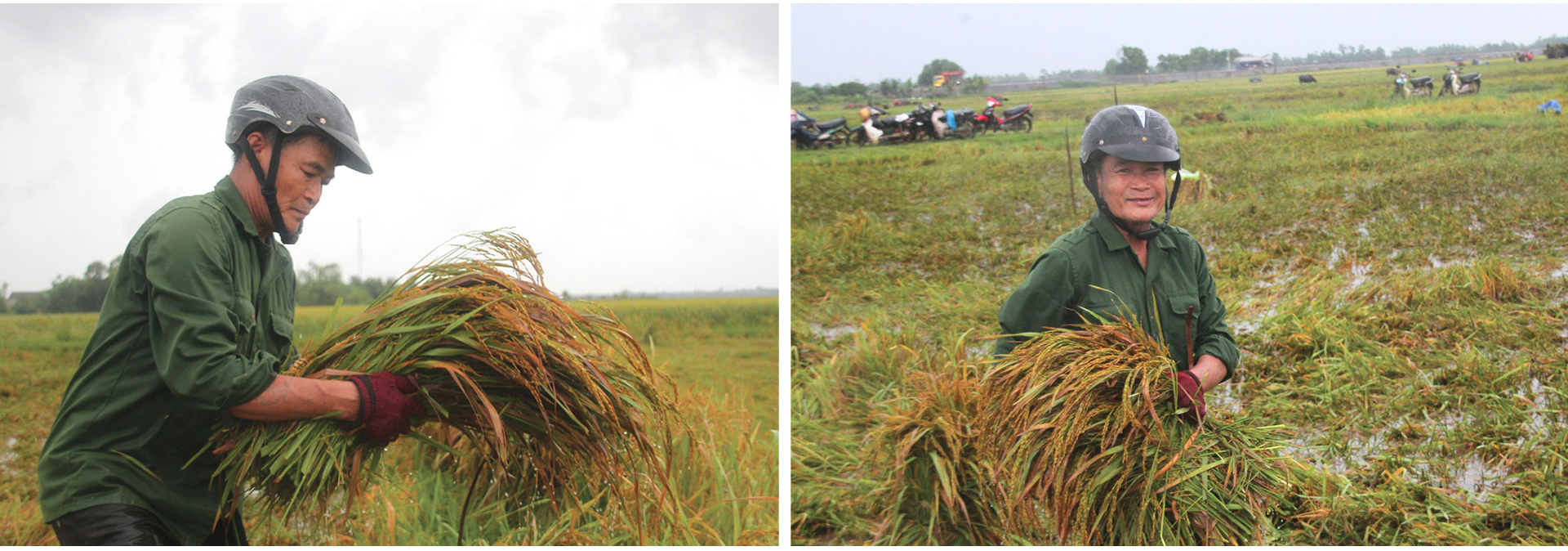 Nông dân miền Trung dầm mình cứu lúa sau mưa bão  ảnh 10