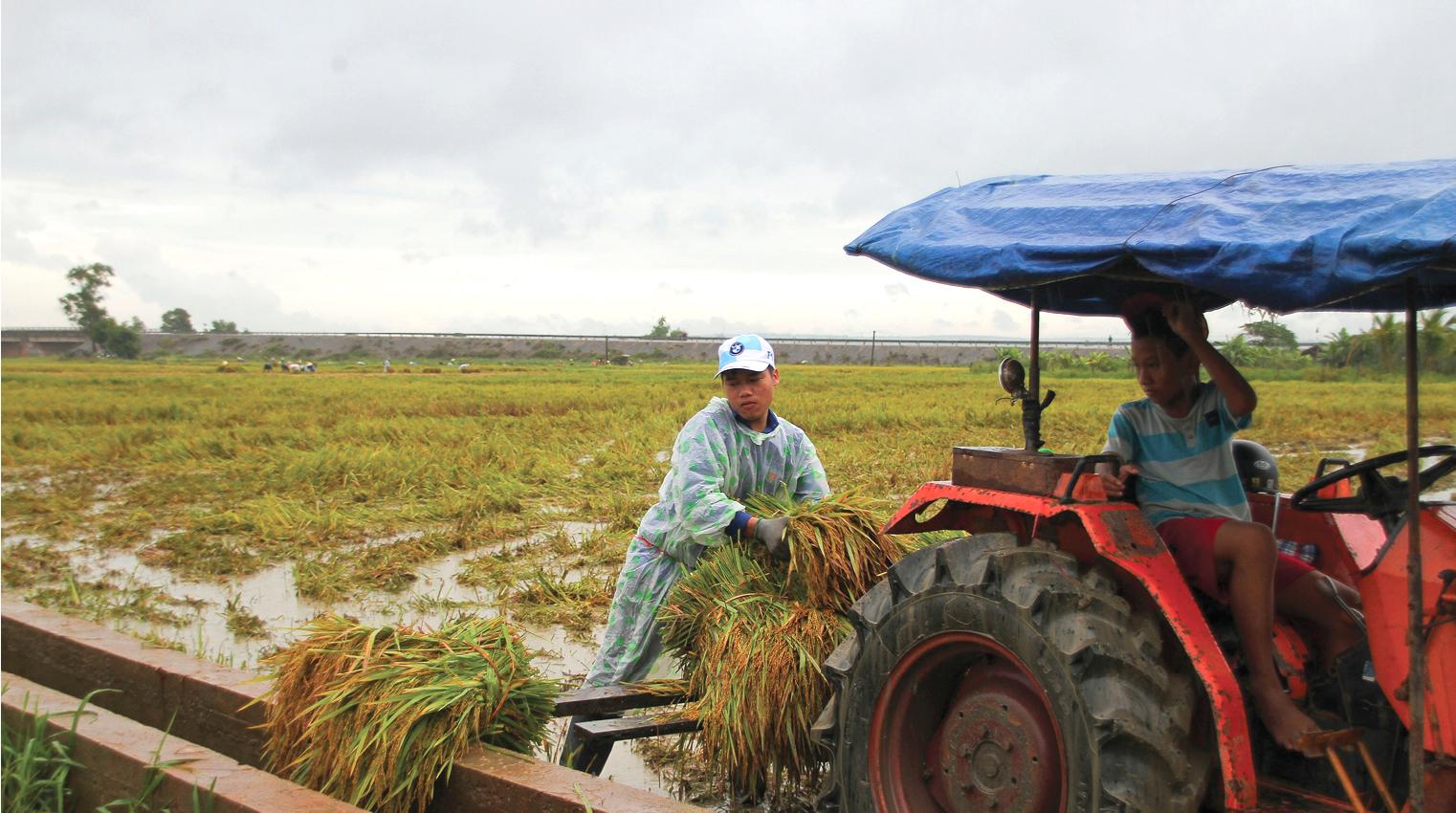 Nông dân miền Trung dầm mình cứu lúa sau mưa bão  ảnh 13