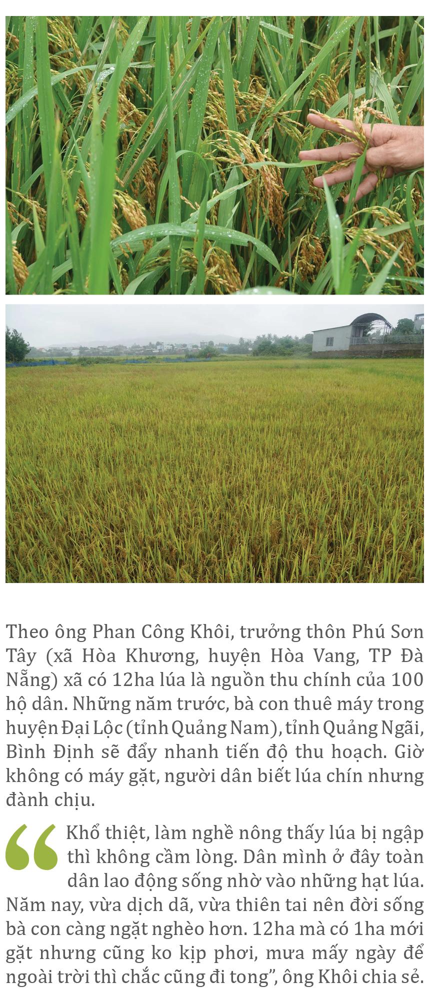 Nông dân miền Trung dầm mình cứu lúa sau mưa bão  ảnh 25