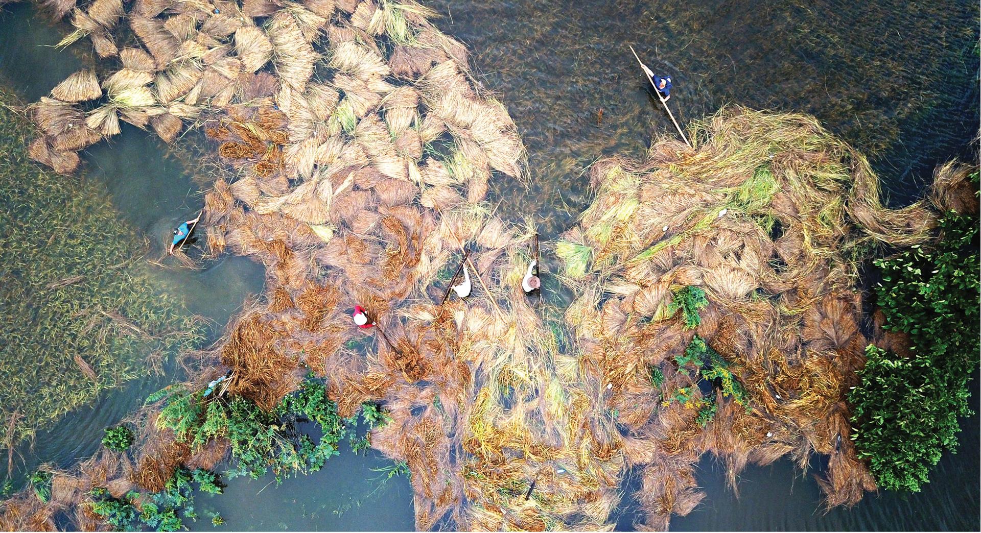 Nông dân miền Trung dầm mình cứu lúa sau mưa bão  ảnh 34