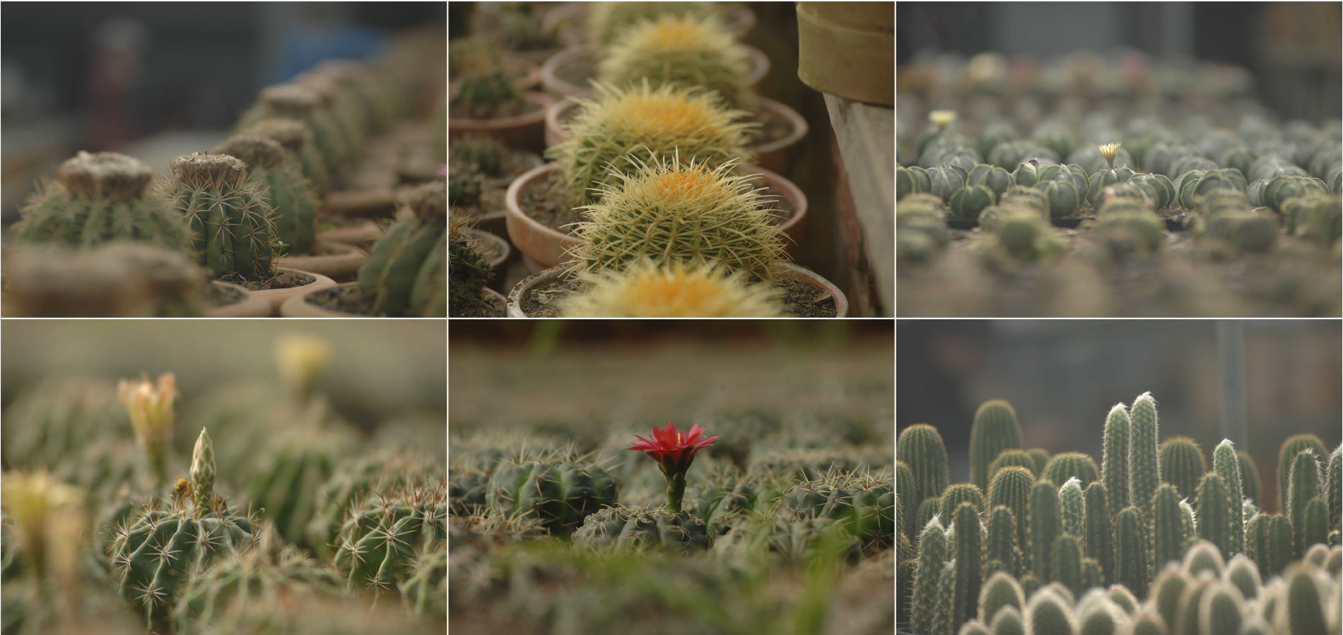 Mê mẩn với 1.000 giống xương rồng tại Làng hoa Sa Đéc ảnh 3