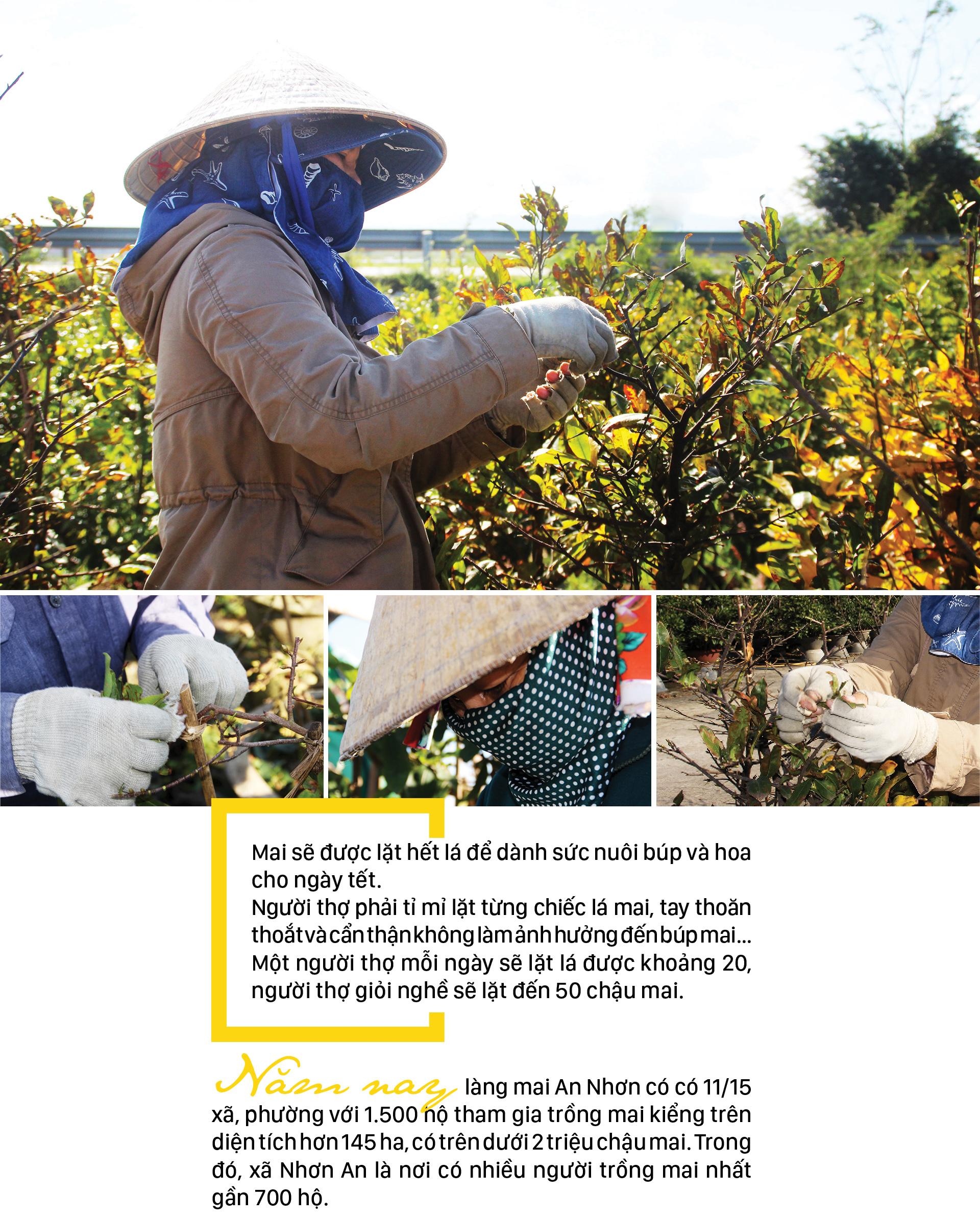 'Đặt báo thức' cho hoa mai nở trúng ngày tết ảnh 6