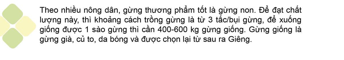 Nông dân Quảng Ngãi phấn khởi thu hoạch gừng Tết ảnh 6