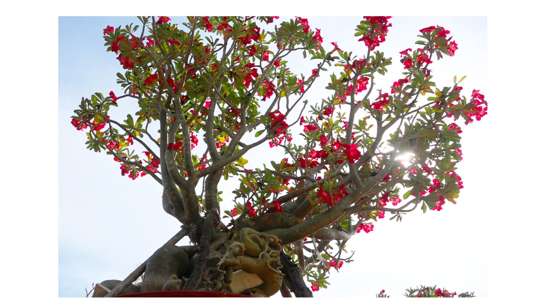 Ngắm sứ 'khổng lồ' tại Làng hoa Sa Đéc ảnh 10