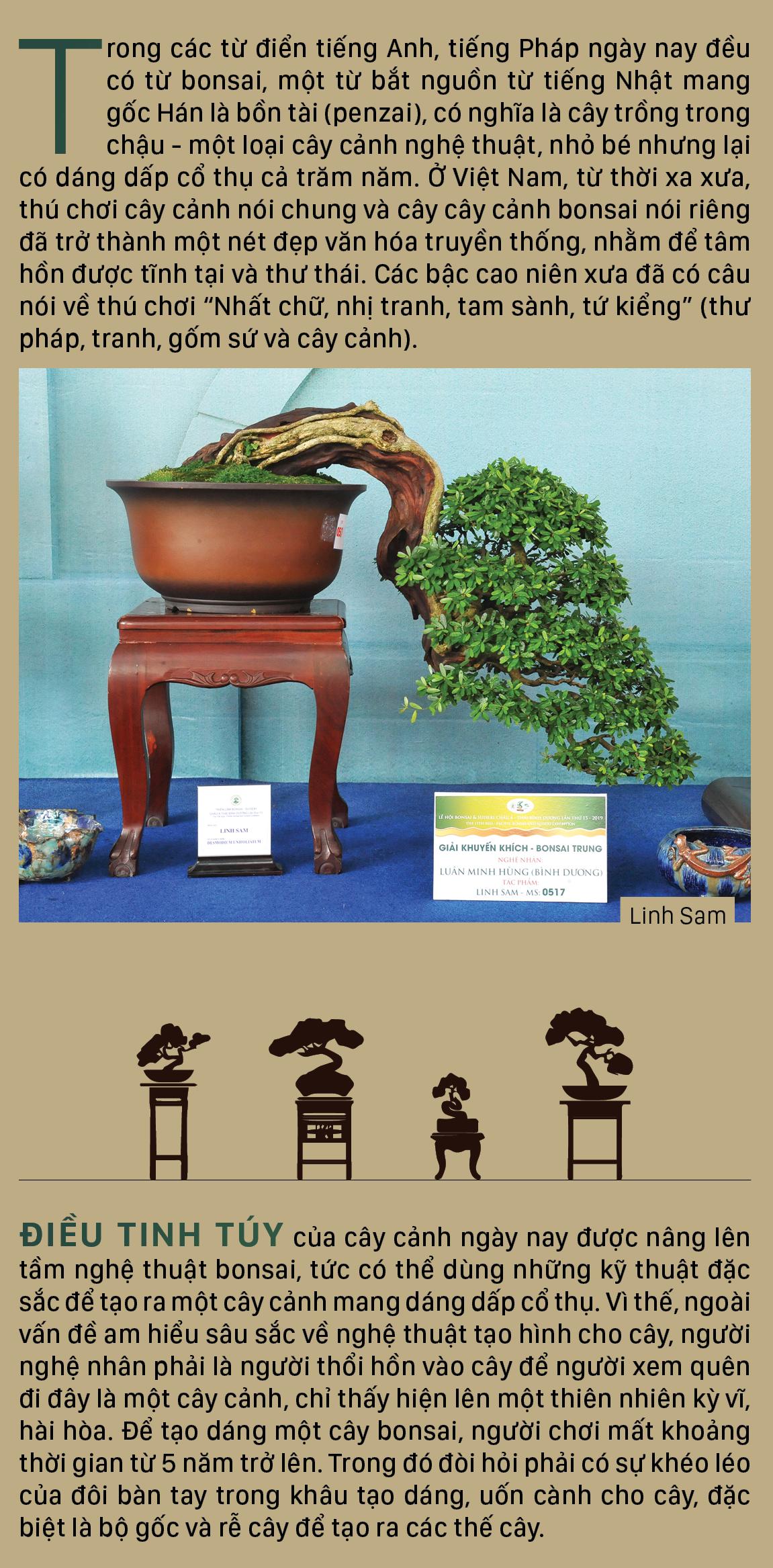 Nghệ thuật bonsai, thú chơi tao nhã ảnh 2