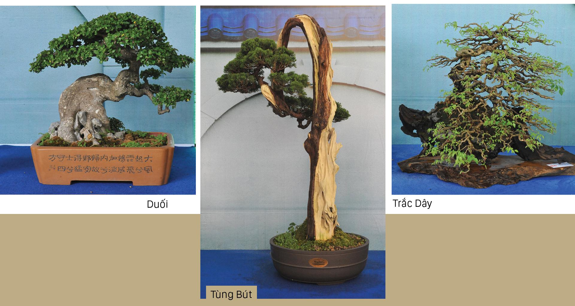 Nghệ thuật bonsai, thú chơi tao nhã ảnh 3