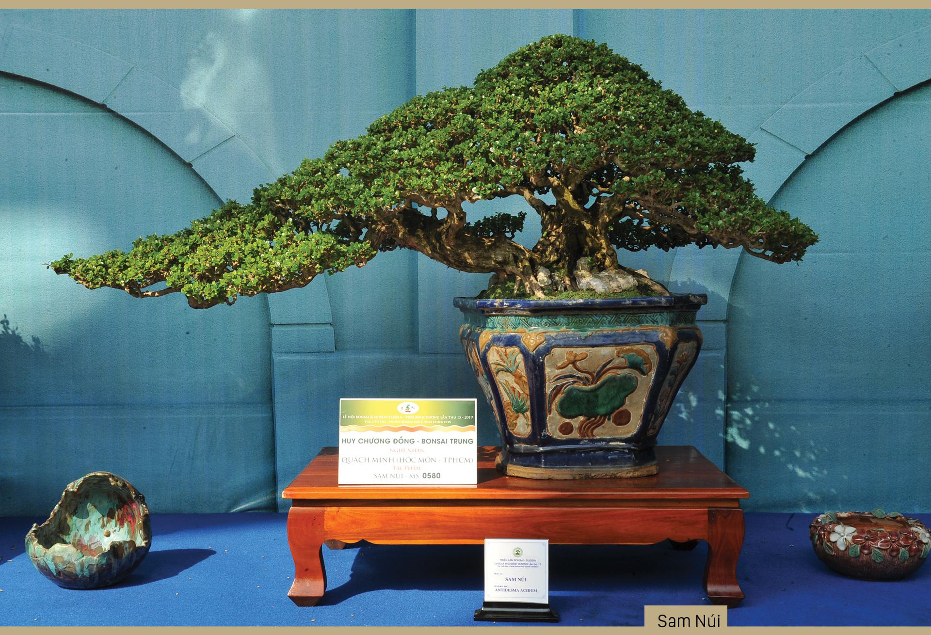 Nghệ thuật bonsai, thú chơi tao nhã ảnh 5