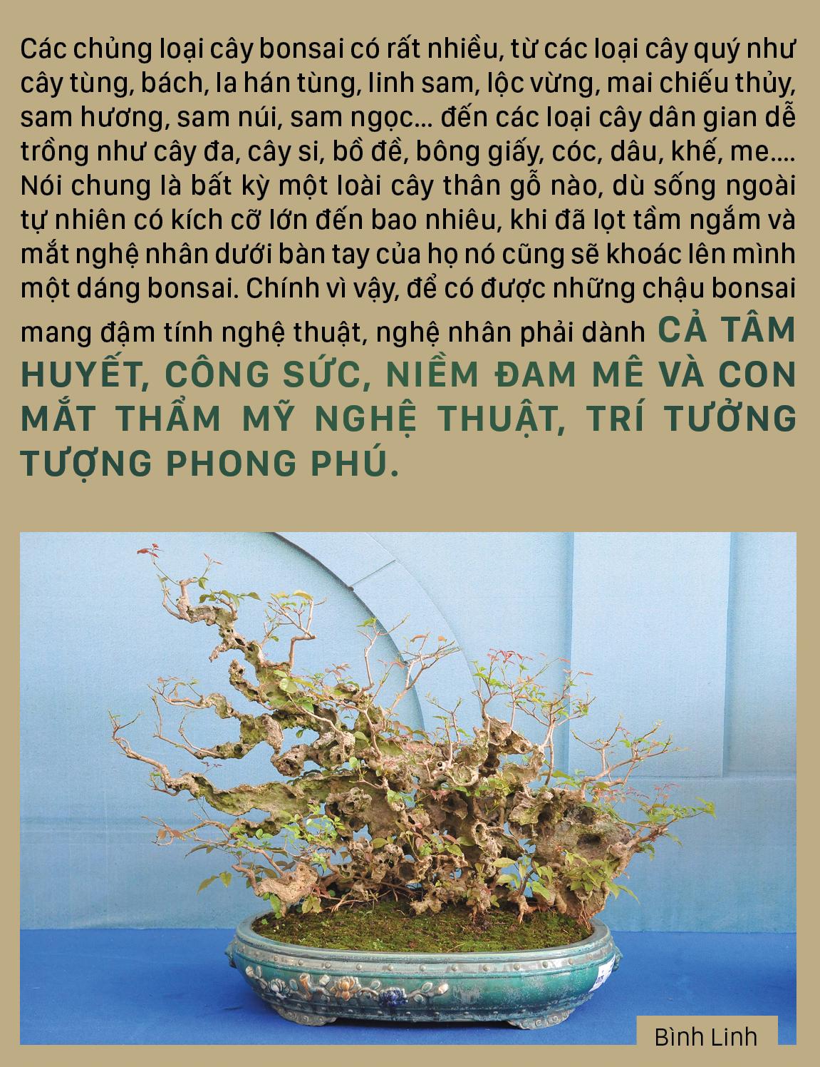 Nghệ thuật bonsai, thú chơi tao nhã ảnh 6