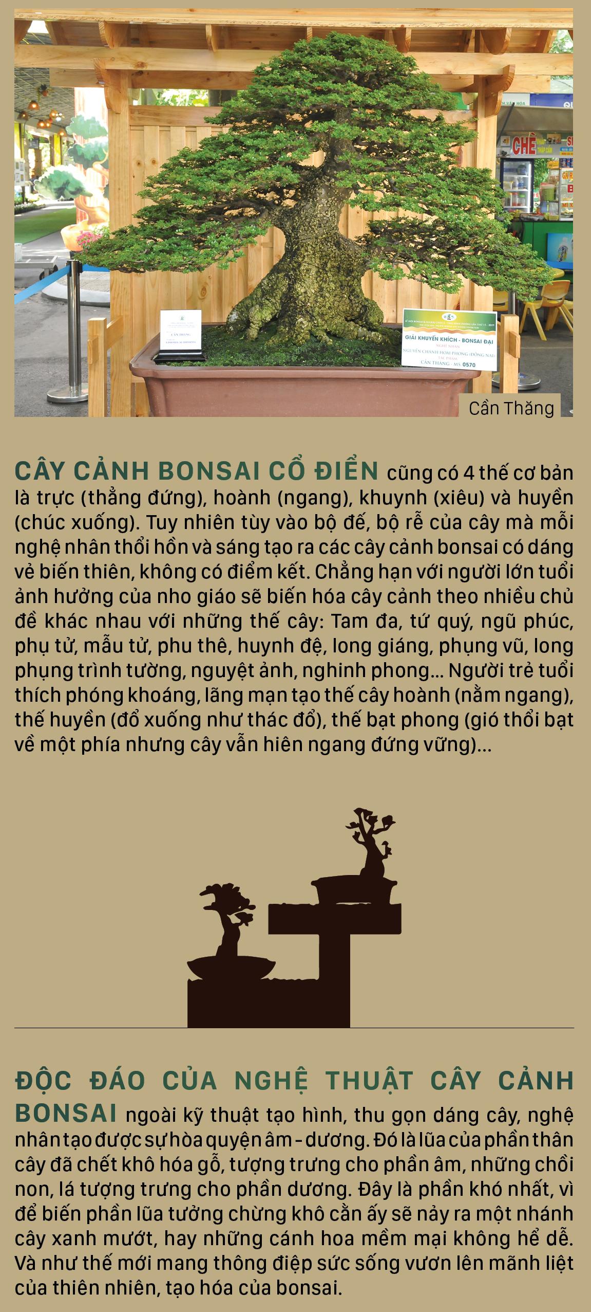 Nghệ thuật bonsai, thú chơi tao nhã ảnh 7