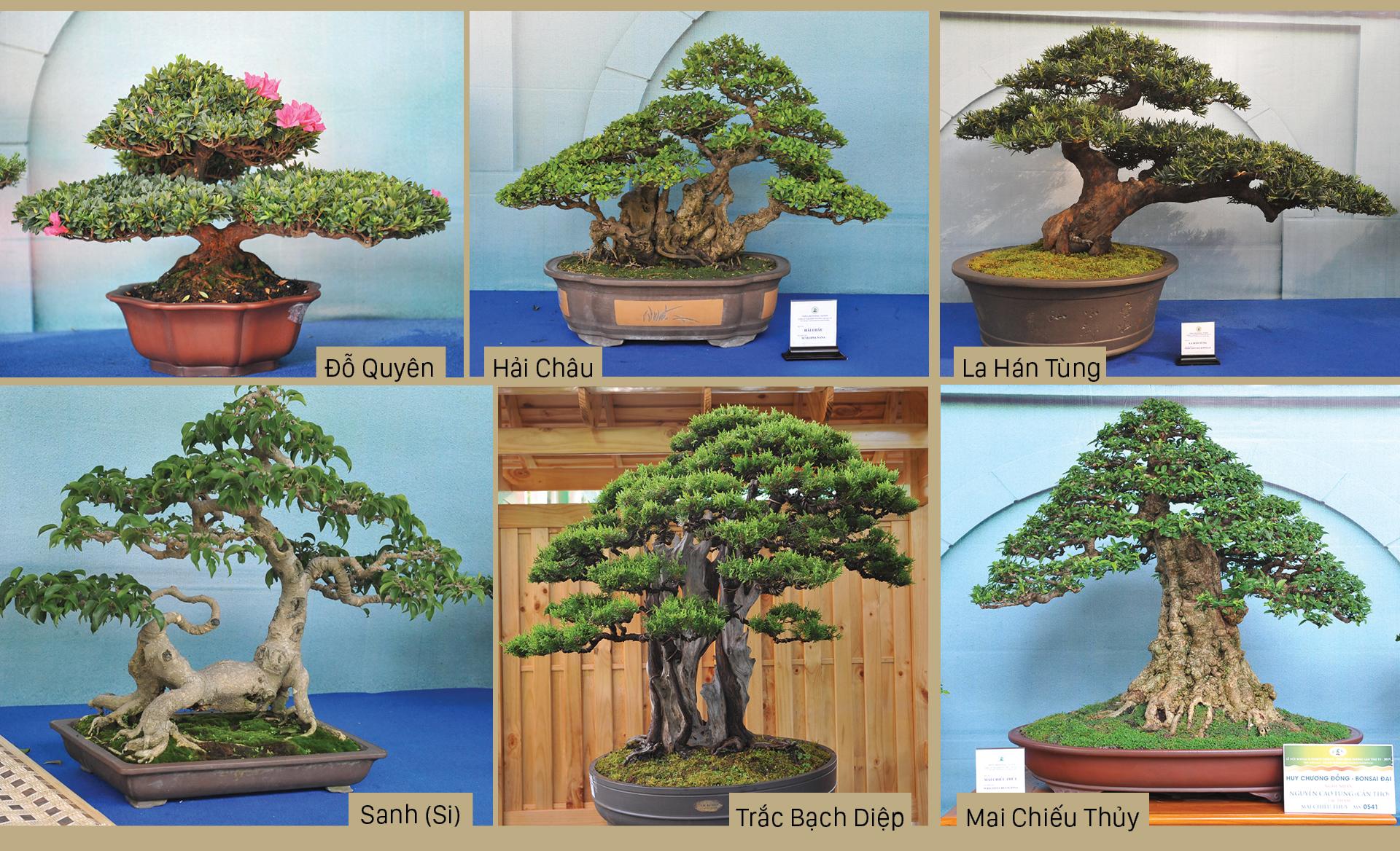 Nghệ thuật bonsai, thú chơi tao nhã ảnh 8