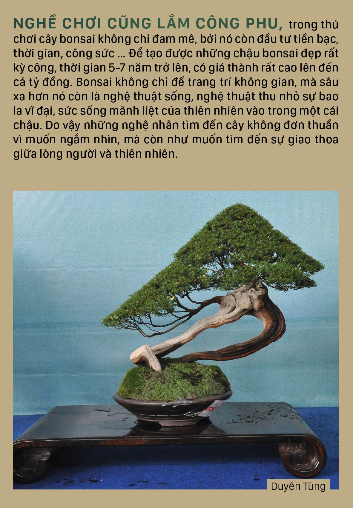 Nghệ thuật bonsai, thú chơi tao nhã ảnh 9
