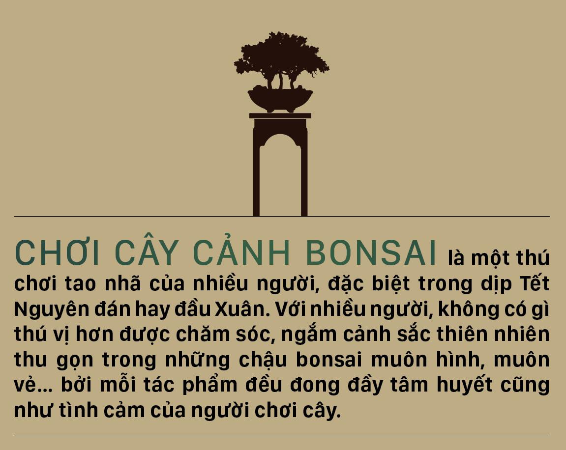 Nghệ thuật bonsai, thú chơi tao nhã ảnh 1