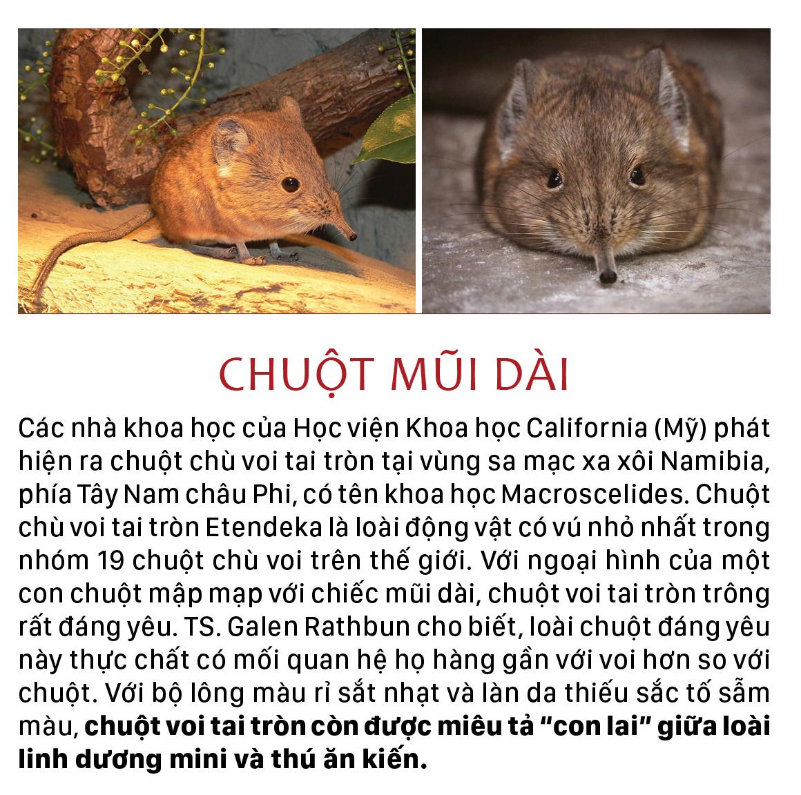 Năm Tý bàn chuyện lạ về chuột ảnh 6