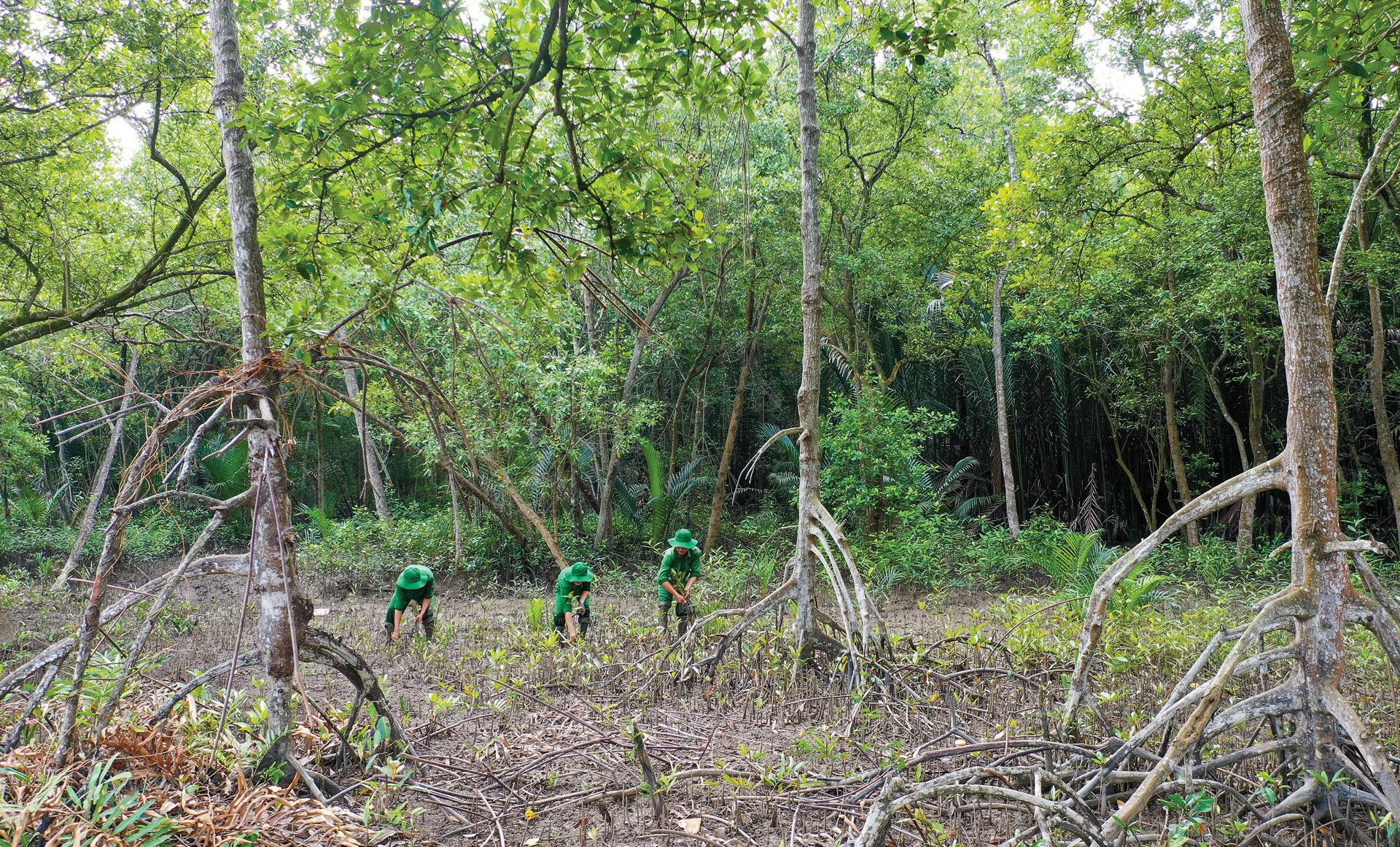 Xanh mãi rừng Cần Giờ ảnh 2