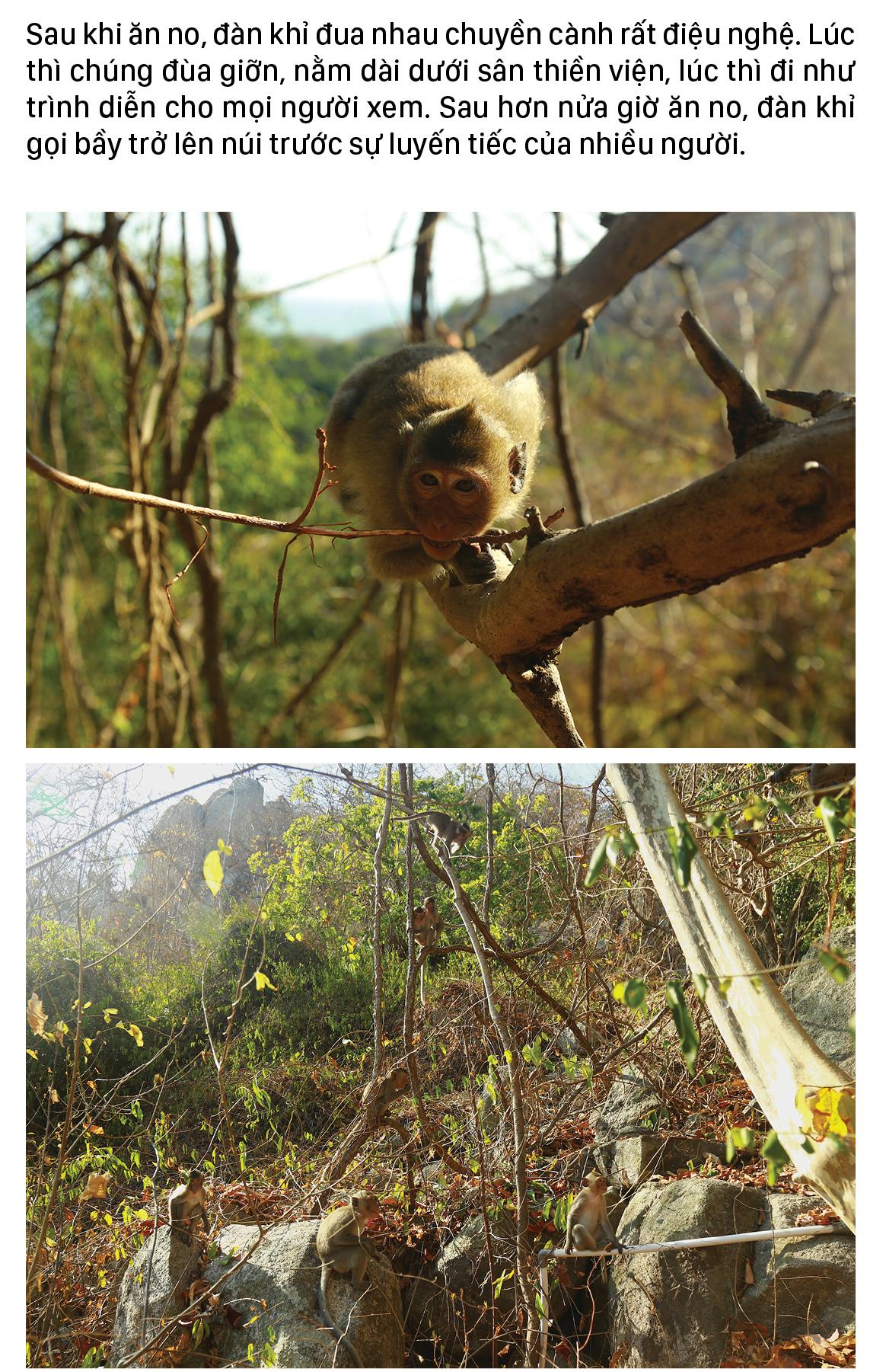 Đàn khỉ sống thân thiện với con người dưới chân núi Kỳ Vân ảnh 15