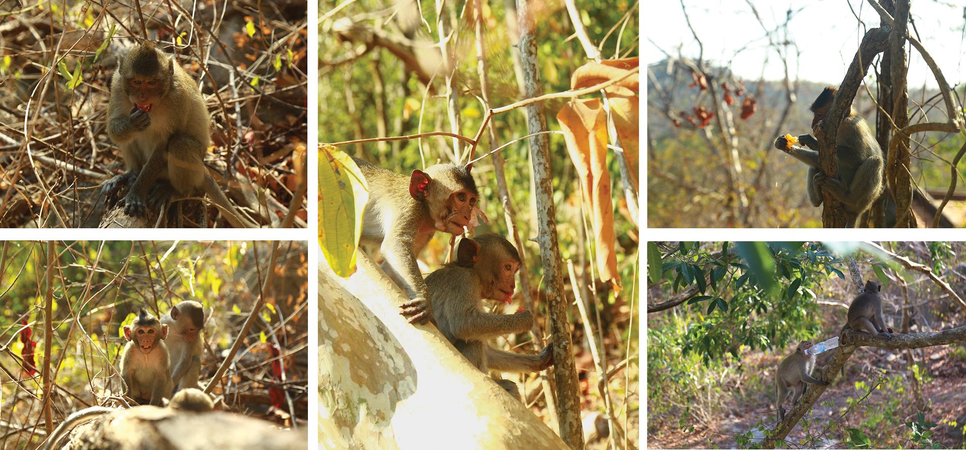 Đàn khỉ sống thân thiện với con người dưới chân núi Kỳ Vân ảnh 16