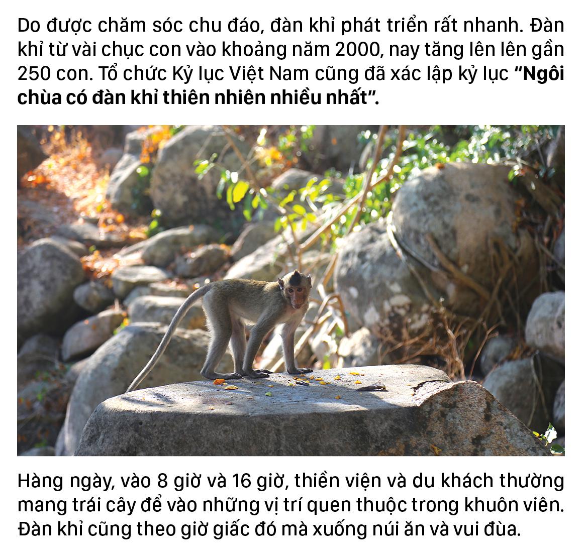 Đàn khỉ sống thân thiện với con người dưới chân núi Kỳ Vân ảnh 6