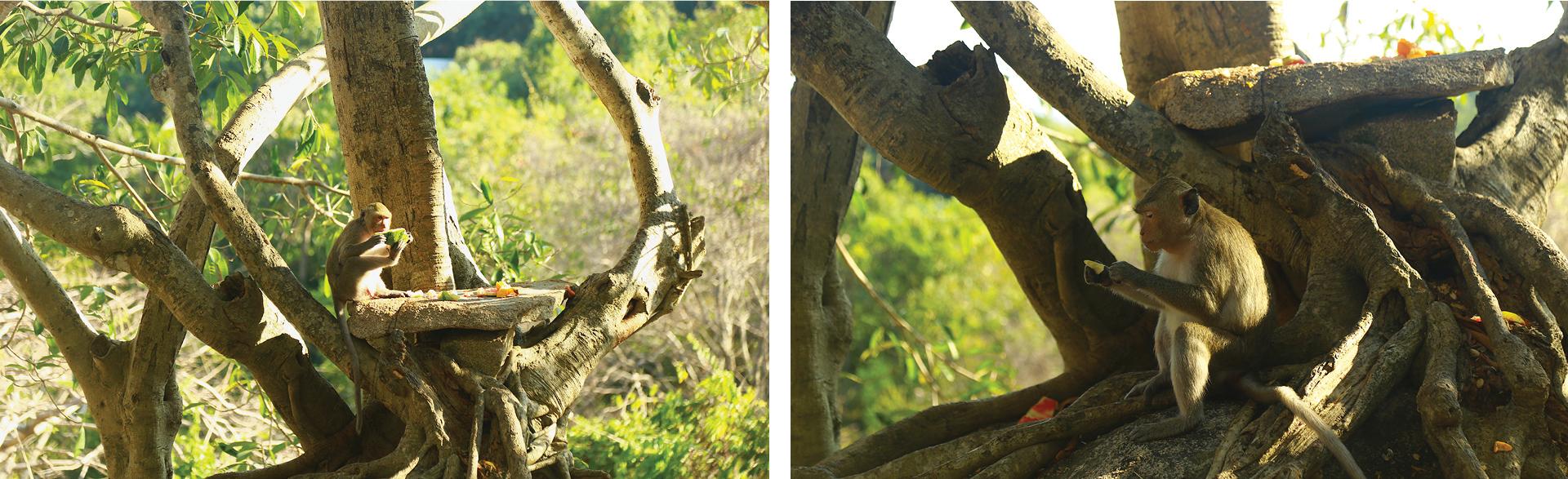 Đàn khỉ sống thân thiện với con người dưới chân núi Kỳ Vân ảnh 9