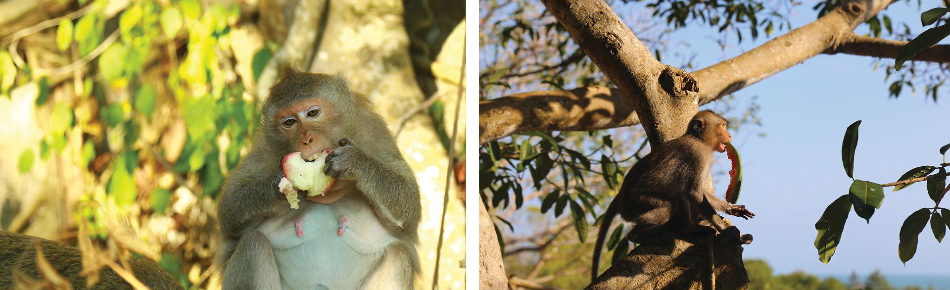 Đàn khỉ sống thân thiện với con người dưới chân núi Kỳ Vân ảnh 11