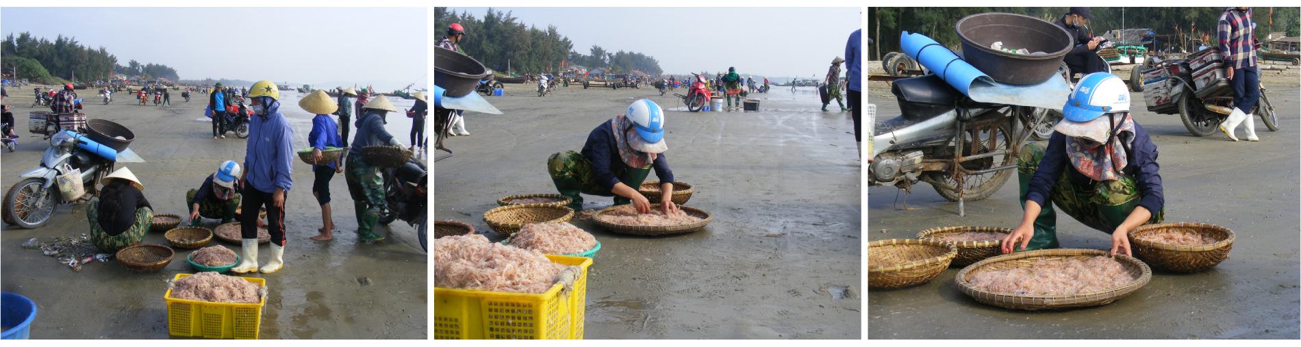 Ngư dân trúng mùa tép biển ảnh 6