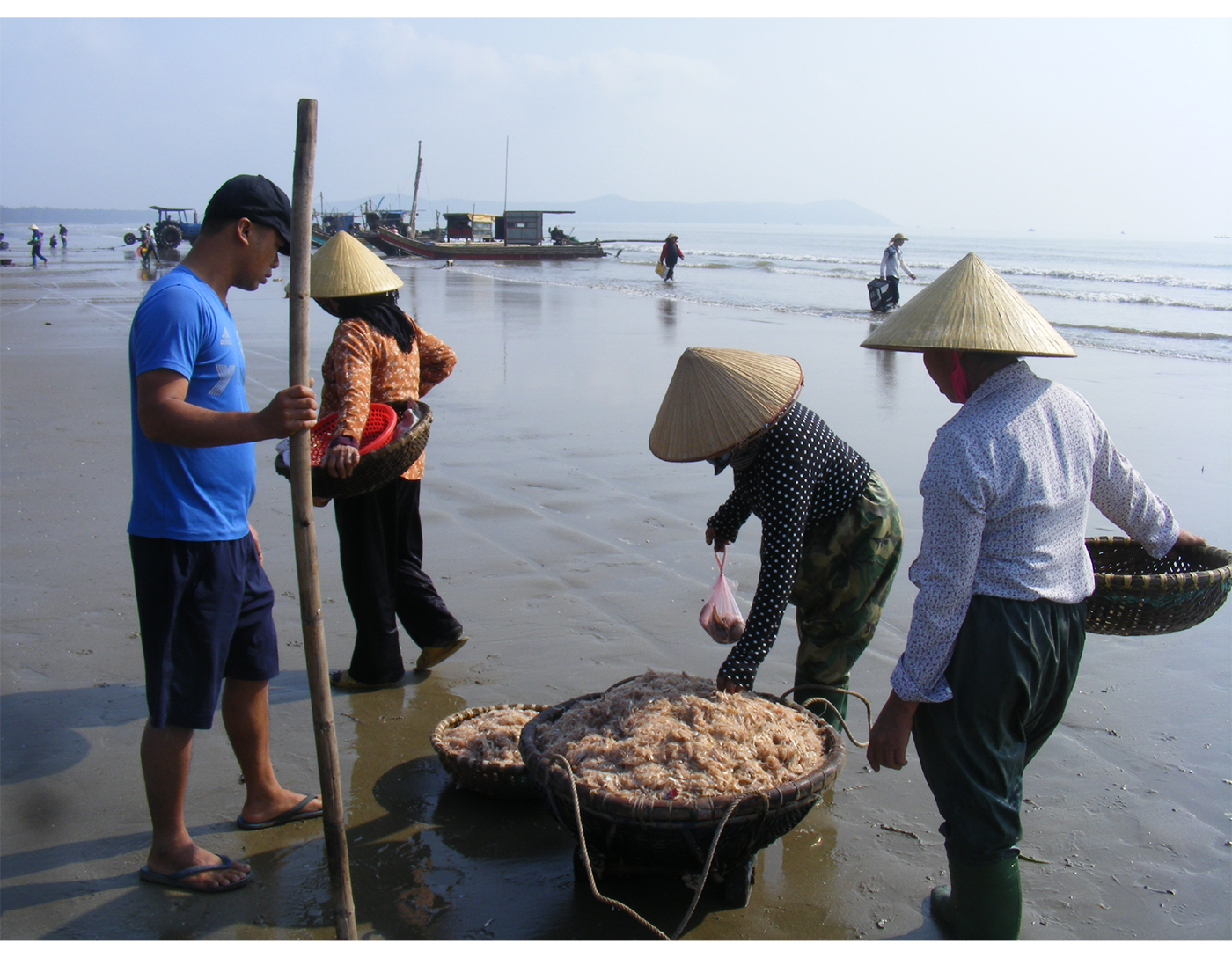 Ngư dân trúng mùa tép biển ảnh 8