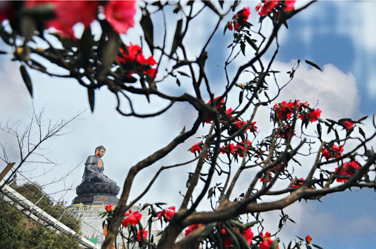 'Nữ hoàng' đỗ quyên 'bung lụa' trên đỉnh Fansipan ảnh 11