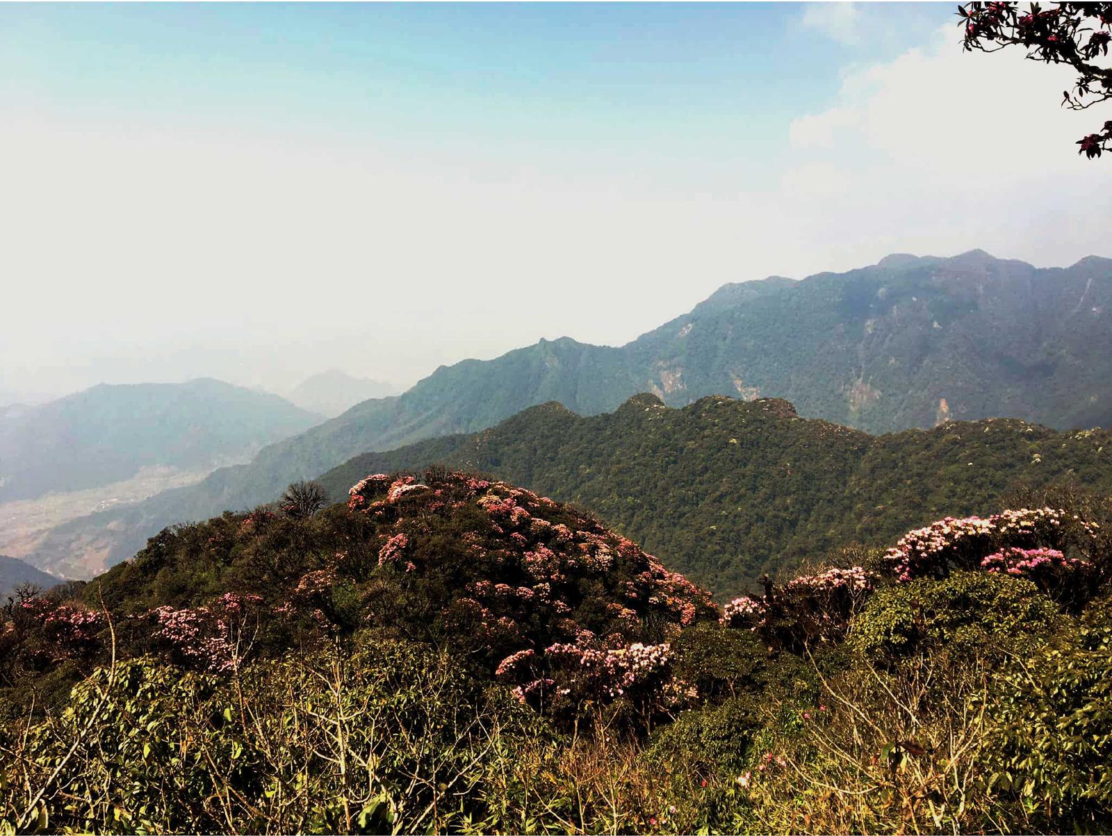 'Nữ hoàng' đỗ quyên 'bung lụa' trên đỉnh Fansipan ảnh 6