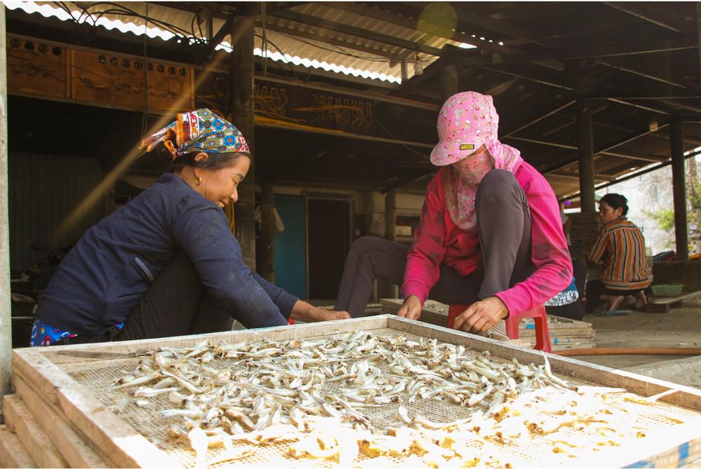 Nhọc nhằn nghề hấp cá phơi khô ảnh 9