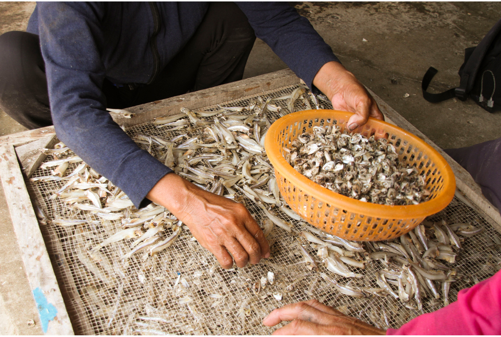 Nhọc nhằn nghề hấp cá phơi khô ảnh 17