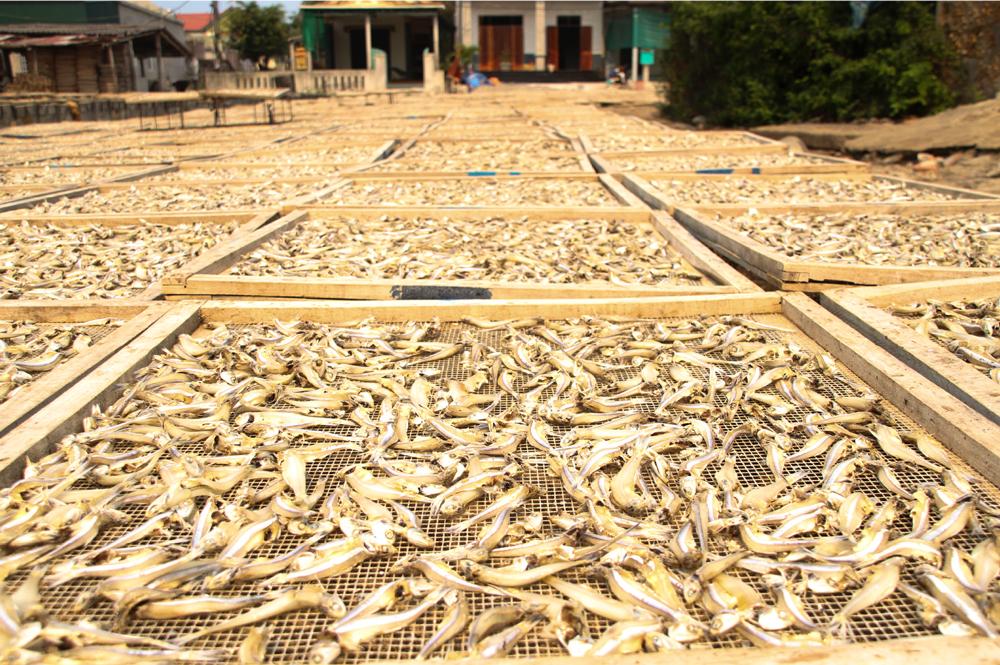 Nhọc nhằn nghề hấp cá phơi khô ảnh 19