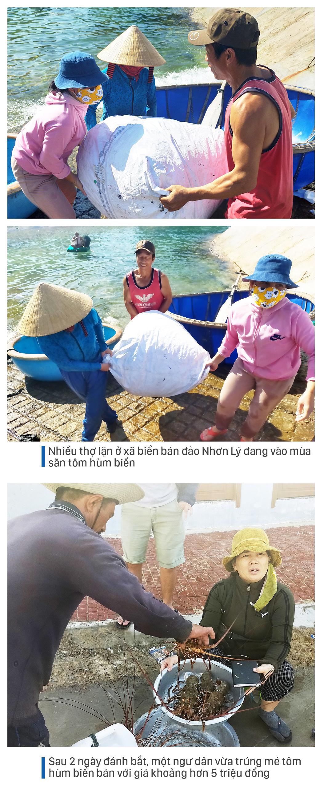Săn tôm hùm biển kiếm bạc triệu mỗi ngày ảnh 6
