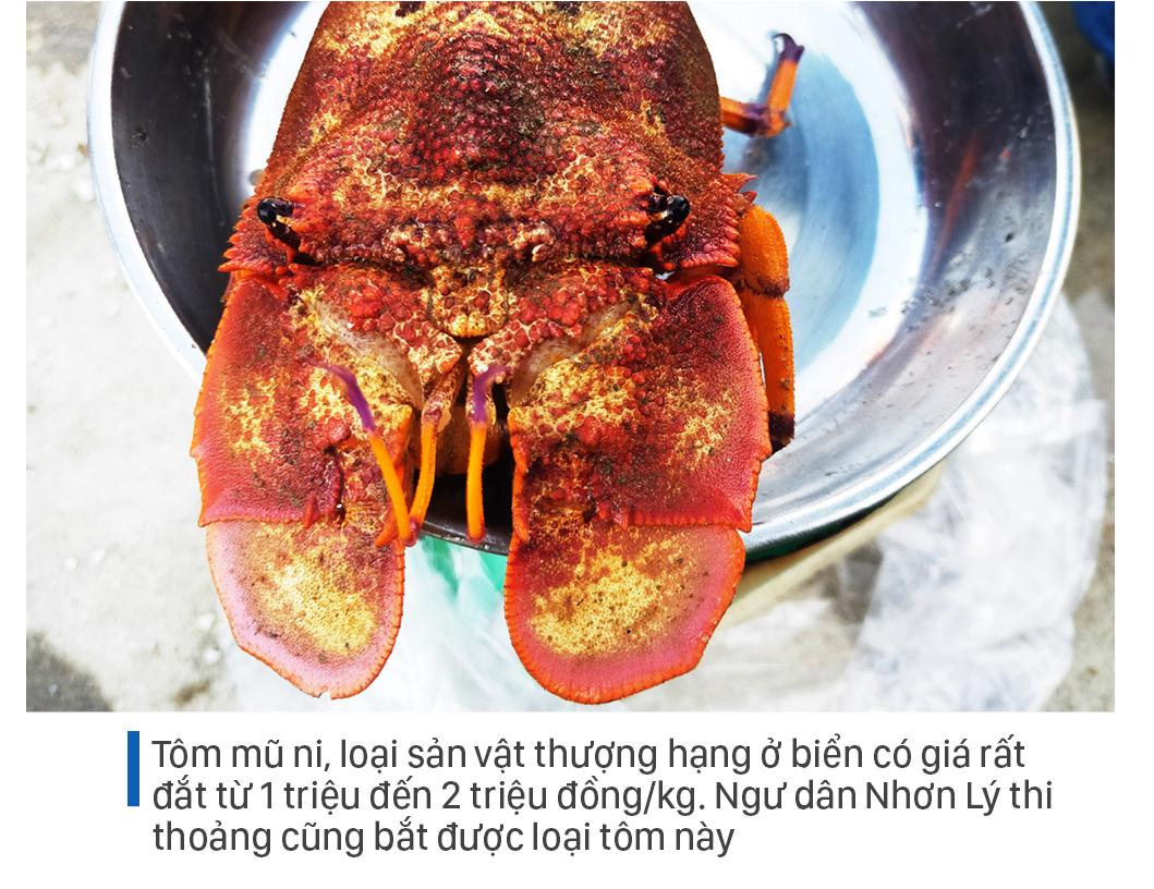 Săn tôm hùm biển kiếm bạc triệu mỗi ngày ảnh 12