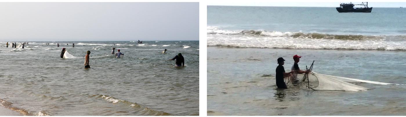 Ngư dân lội bộ ven bờ bắt hàng tạ ruốc biển ảnh 5