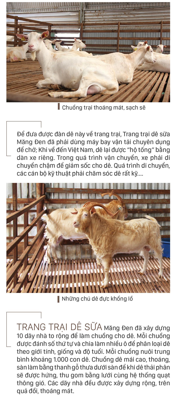 Trang trại  8.000 con dê sữa tại Măng Đen ảnh 5