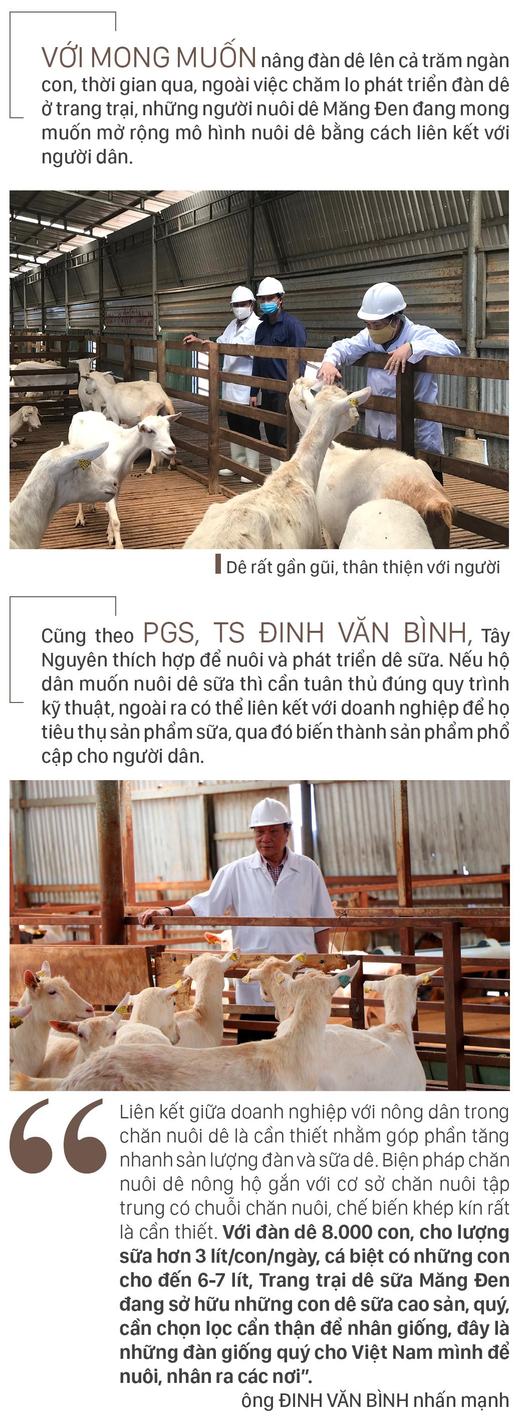 Trang trại  8.000 con dê sữa tại Măng Đen ảnh 12