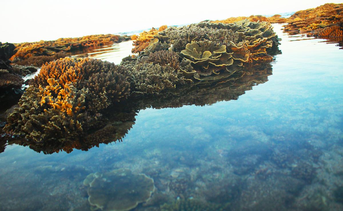 Ngắm san hô mùa nước cạn ở Quảng Ngãi ảnh 2