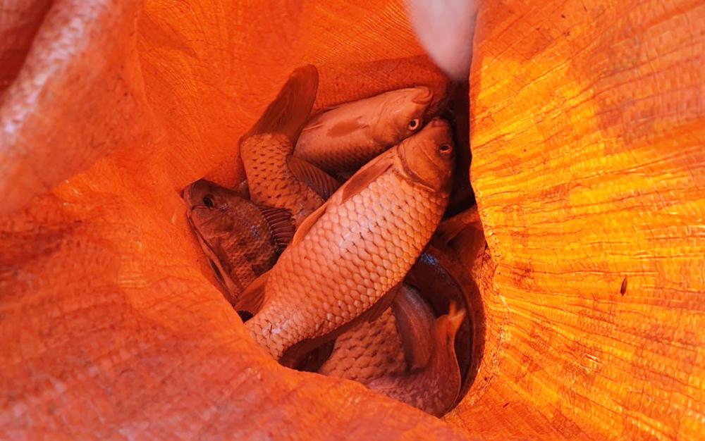 Độc đáo lễ hội đánh cá Đồng Hoa ảnh 21