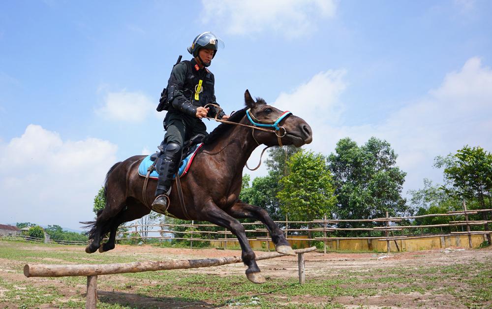 Cảnh sát cơ động Kỵ binh huấn luyện ngựa nghiệp vụ ảnh 15